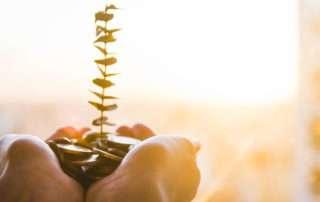Mani che tengono delle monete dalle quali germoglia una pianta